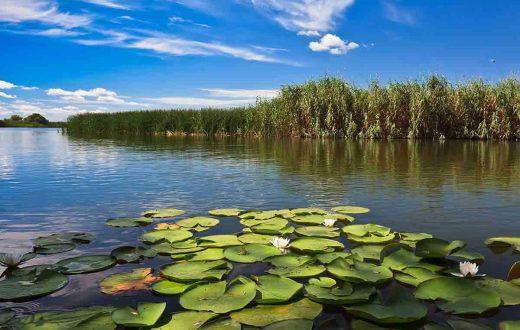 Excursion dans le Delta du Danube