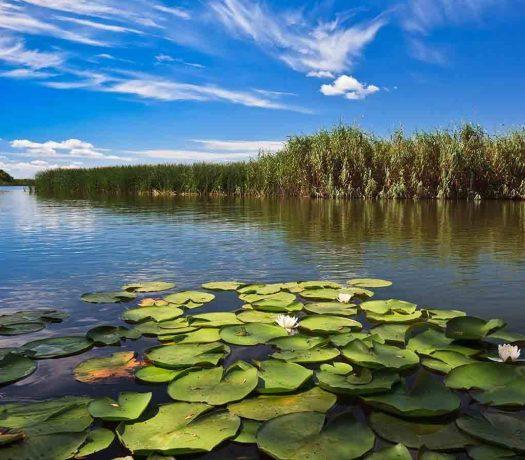 Lac dans le Delta du Danube