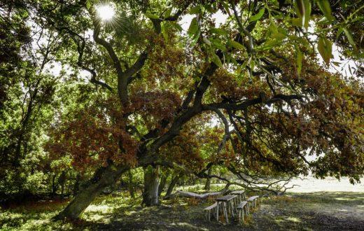 La forêt Letea