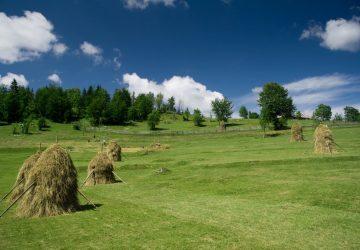 Randonnée : Paysages d'Apuseni