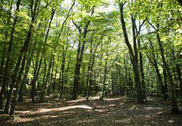 Bois et forêts en Roumanie