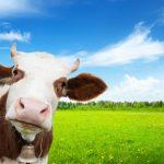 Agriculture et élevage en Roumanie