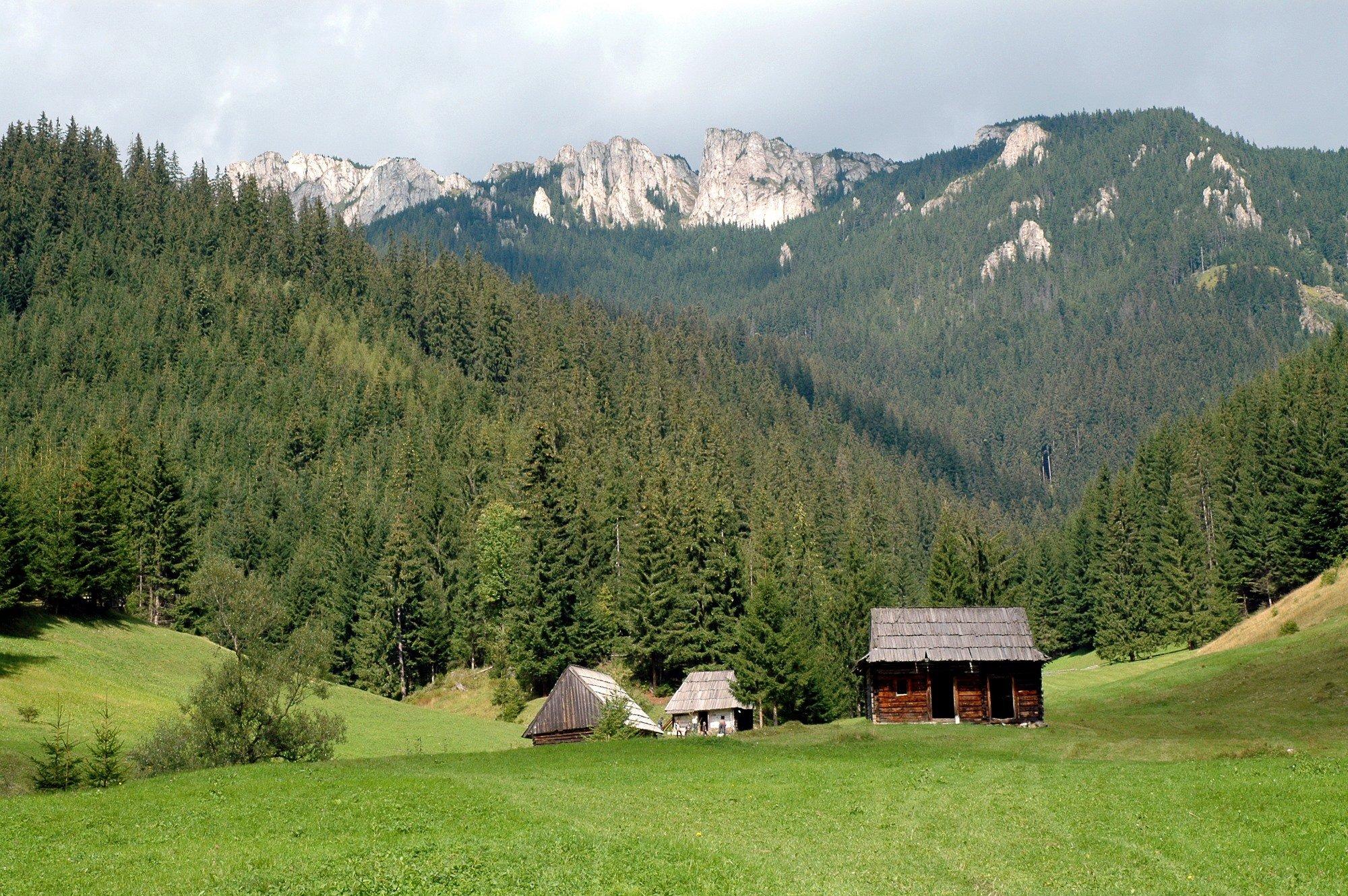 Bois et for u00eats en Roumanie Bonjour Roumanie # Fiscalité Bois Et Forêts