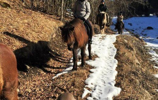 Promenade à cheval dans les forêts de Harghita
